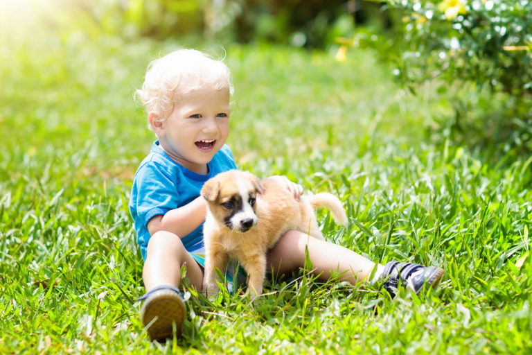 A young boy plays in a field with his puppy.