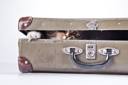 Moving Tips for Pets