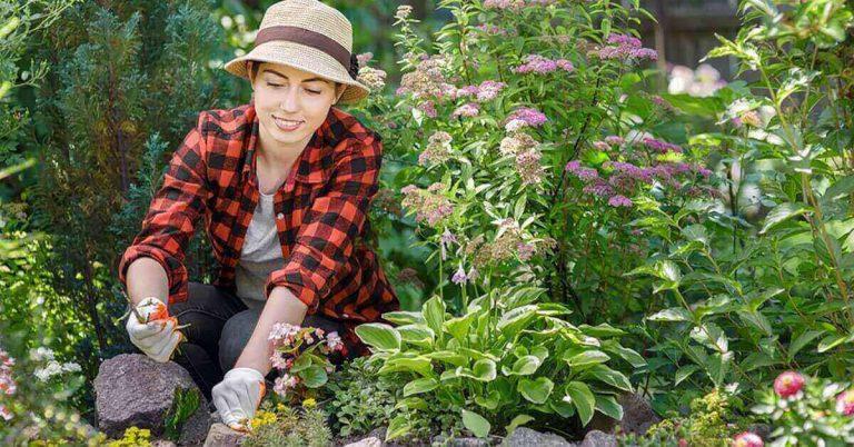 A woman plants flowers.