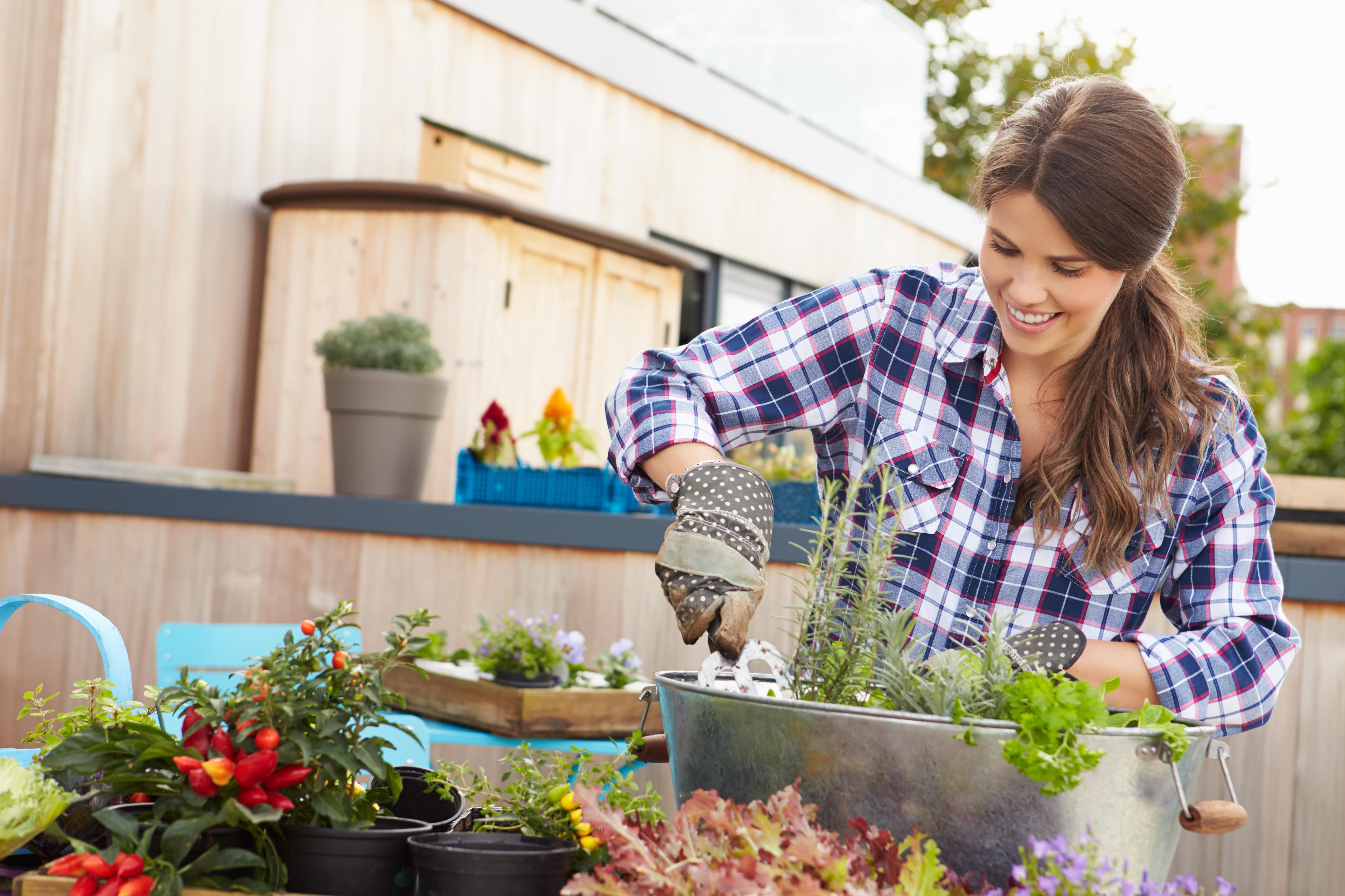 Gardening Tips for Spring in Walton-on-Thames