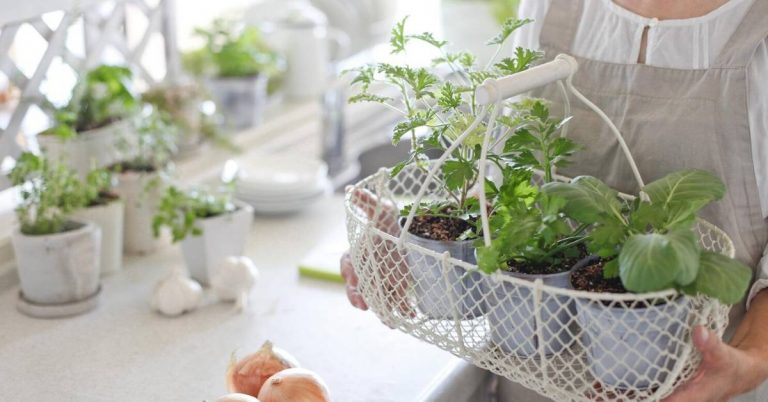 a woman holding a basket of indoor herbs