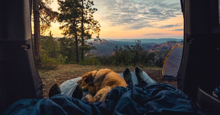 A couple and their dog camping