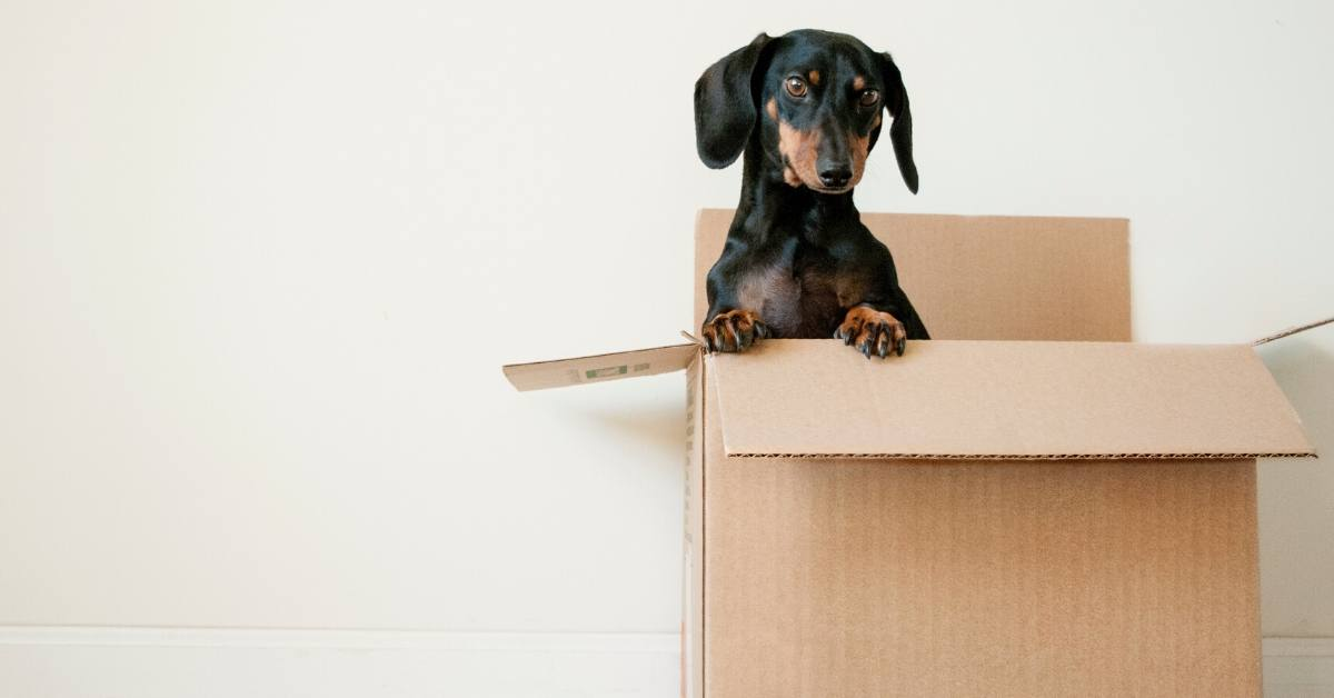 How to Choose the Right Type of Moving Company